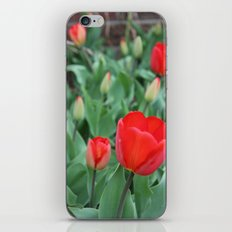 Tulip Darlings iPhone & iPod Skin