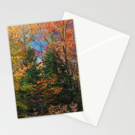 Autumn Forest Photograph Stationery Cards