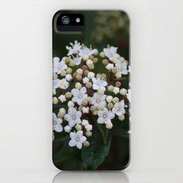 Viburnum tinus flowers and buds iPhone Case