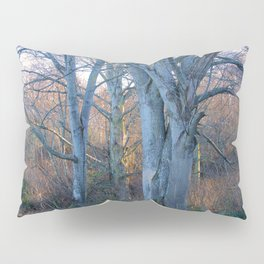 WINTER MAPLES IN AFTERNOON LIGHT Pillow Sham