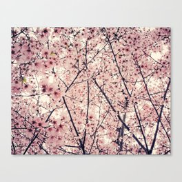 Blizzard of Blossoms Canvas Print