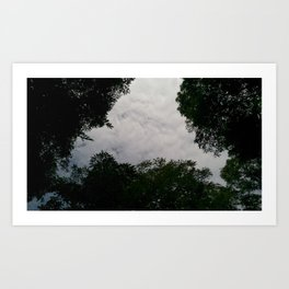 Looking up from the nature pt. 2 Art Print