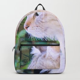 Cat to Dream With Backpack