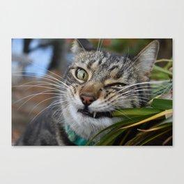 Cat Snack Canvas Print