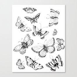 Butterflies and moths Canvas Print