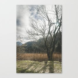 The big leafless tree Canvas Print