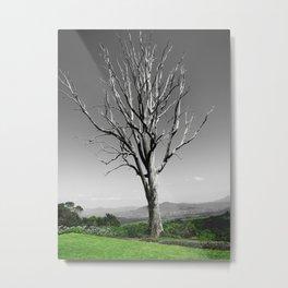 Blue Gum Tree Metal Print