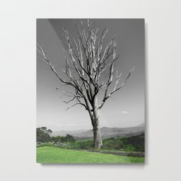 Blue Gum Tree Metal Print