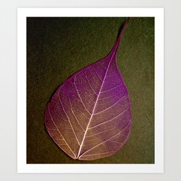 Life Lines * Purple Heart Brown * Thailand Bodhi Leaf Skeletons Art Print
