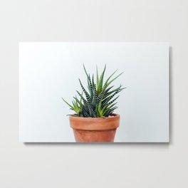 Zebra Plant Metal Print