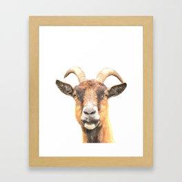 Goat Portrait Framed Art Print