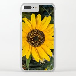 Time in the Sun Clear iPhone Case