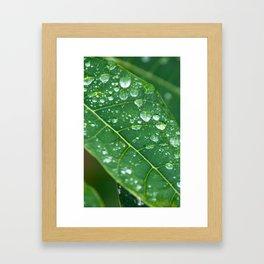 Rain Drops on Papaya Leaf Framed Art Print