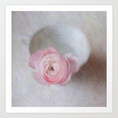 Pale Pink Textured Ranunculus Art Print