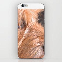 Doggy iPhone Skin