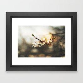 Sunset & blossom Framed Art Print