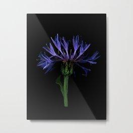 Lilac flower - 108 Metal Print