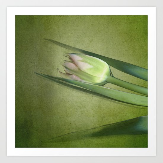tulips studies - variation green Art Print