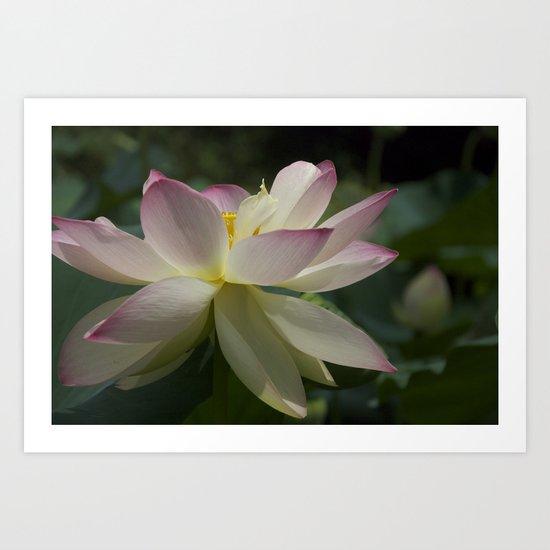 Lotus flower 2 Art Print