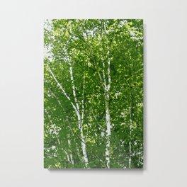 Birch Trees Photo Art Metal Print