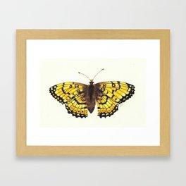 Fritillary Butterfly Framed Art Print
