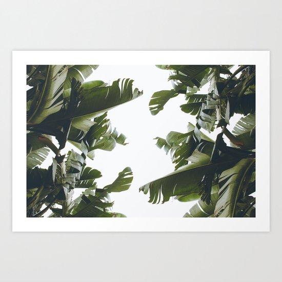 Birds of California Art Print