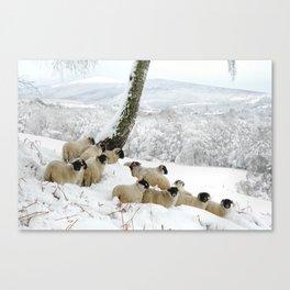 Sheltering Flock Canvas Print