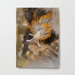 Opalescent Nudibranch Metal Print
