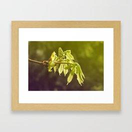 Unfurling Framed Art Print