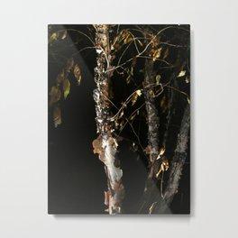 Birch A'peel Metal Print