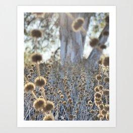 Western Wilderness  Art Print