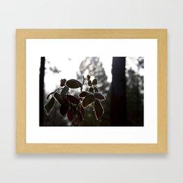 Frosty Leaves Framed Art Print