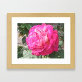 Pink Perfection  Framed Art Print