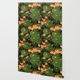 Tropaeolum flowers Wallpaper