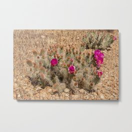 Desert Cacti in Bloom - 2 Metal Print