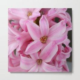 pink hyacinth flower Metal Print