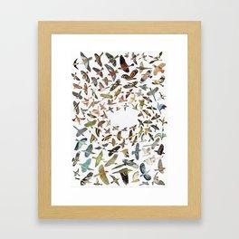 Bird, Birds, Birds Framed Art Print