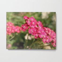 Pretty in Pink. Metal Print