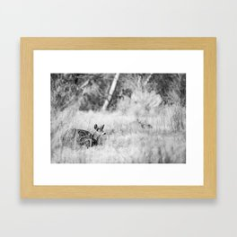 DONT WAKE THE BUCK Framed Art Print