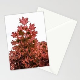 Red Maple Stationery Cards