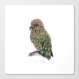 New Zealand Kea Canvas Print