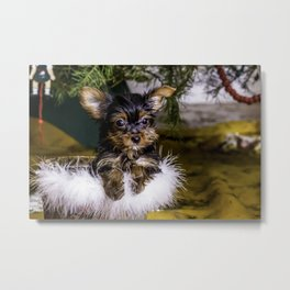 Tiny Yorkie Puppy in a Fuzzy Basket Sitting under a Christmas Tree Metal Print