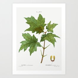 Silver maple, Acer saccharinum from Traité des Arbres et Arbustes que l'on cultive en France en plei Art Print