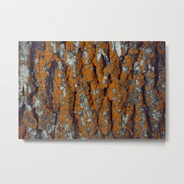 Orange Moss Metal Print