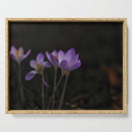 crocus beautiful purple spring flower Serving Tray