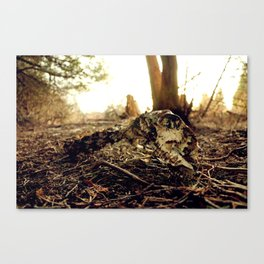 Bones or Meal Canvas Print