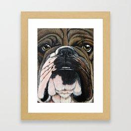 Beggin' Bully Framed Art Print