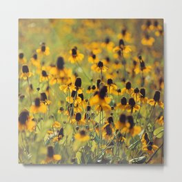 Yellow Hat Dance -- Dreamy Botanical Landscape Mexican Hat Coneflowers Afield Square Metal Print