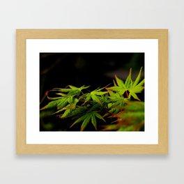 Green Japanese Maple Leaves Photography Framed Art Print