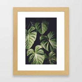 Monstera America Framed Art Print